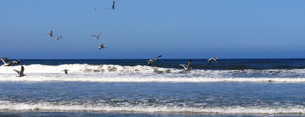 Sea Gulls in Flight