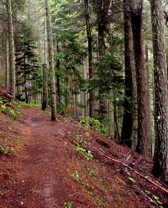 Spiritual orbs protecting the Oregon woods.