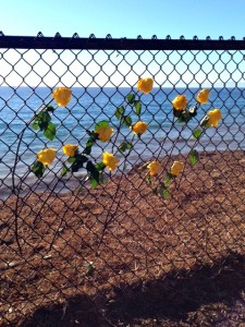 Yellow roses magically appeared overlooking the Pacific Ocean!